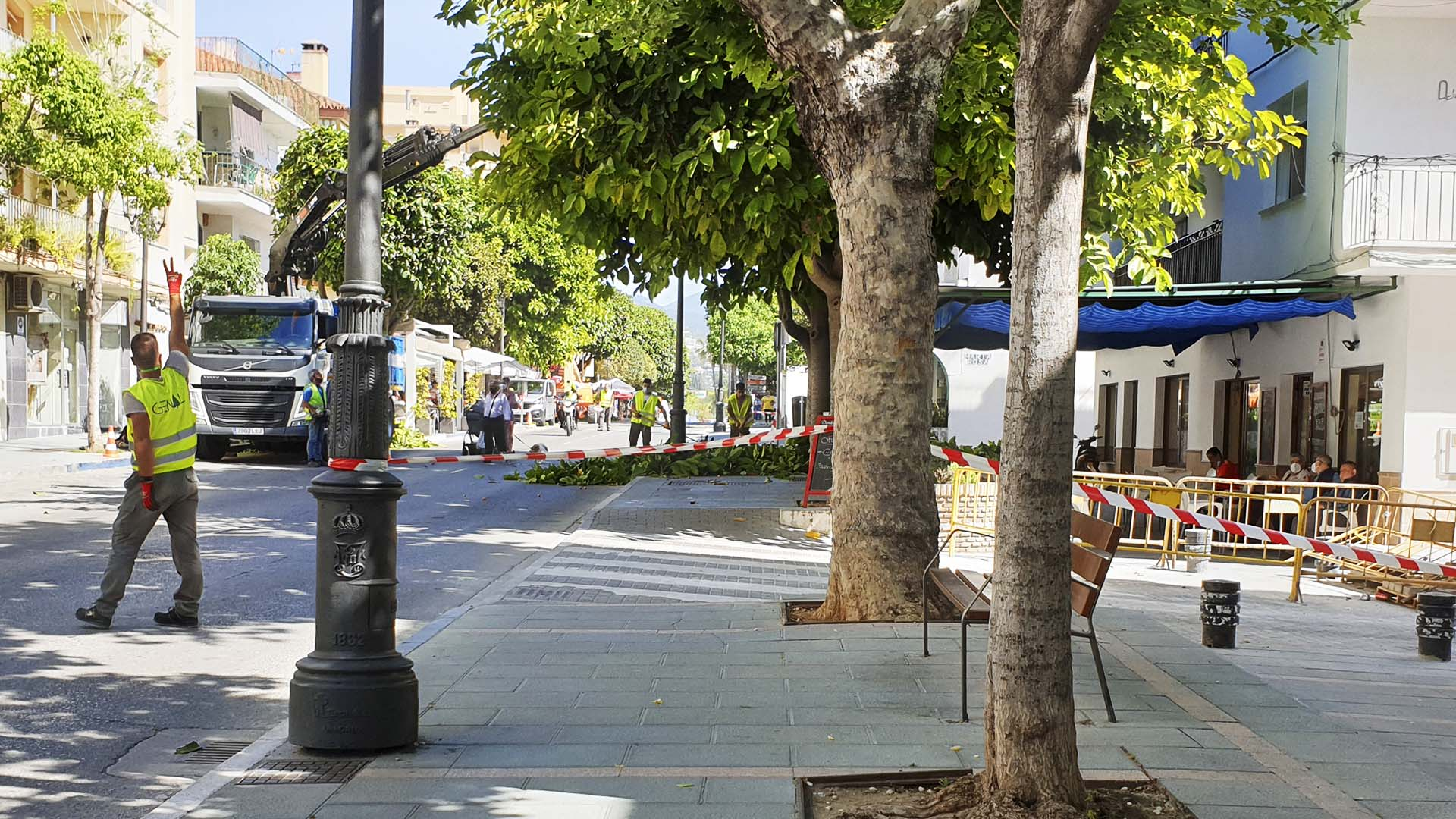 El Ayuntamiento inicia el Plan de Poda en San Pedro Alcántara