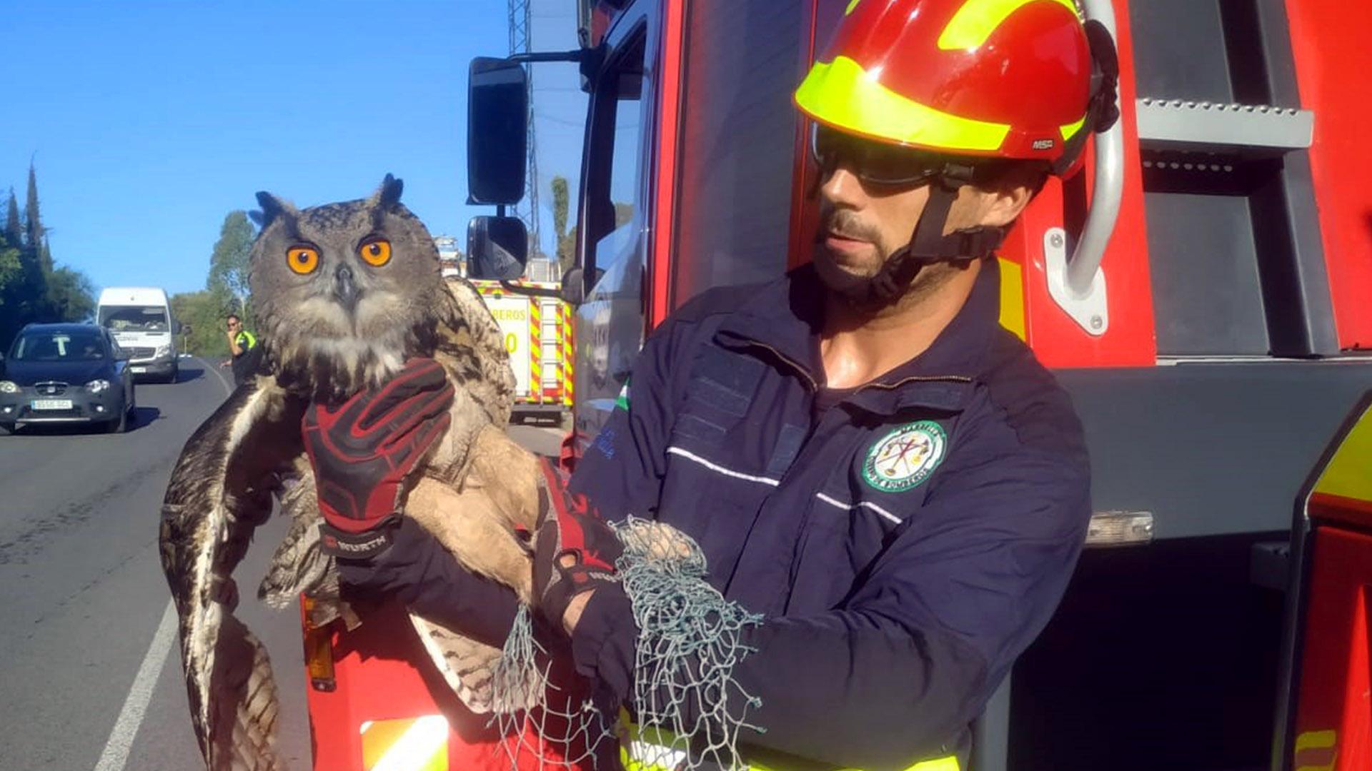 Los bomberos rescatan a un búho real atrapado en la red de protección de un campo de golf